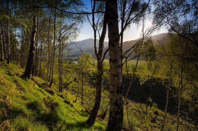 Glen Afric, Scotland
