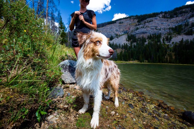 An aussie pup poses at the upper Green River Lake